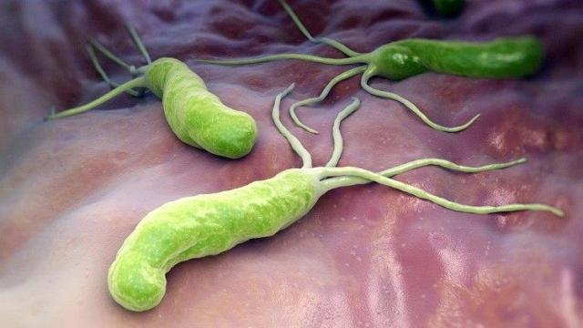Najbolji suplementi za gastritis - koji suplementi se koriste kod gastritisa