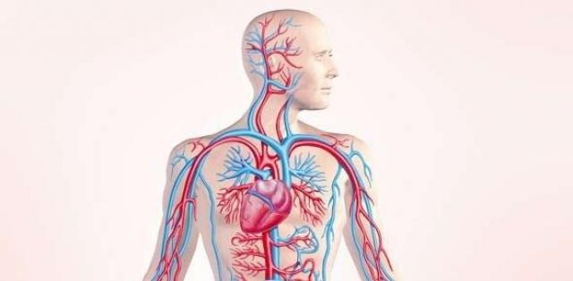 Kako se popravlja cirkulacija krvi - Terapije za bolju cirkulaciju
