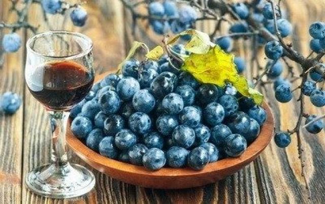 Kako trnjina (Prunus spinosa) kao lekovita bobica pomaže crevnoj flori?