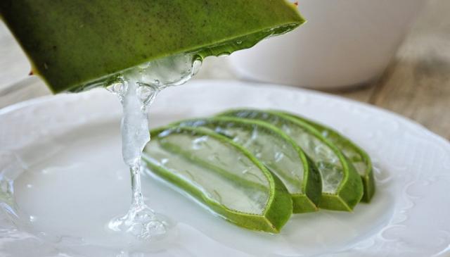 Aloe vera kao lek - kako da iskoristite ovu lekovitu biljku?