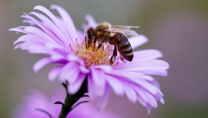 Propolis - proizvod pčela koji je odličan za imunitet, kožu i infekcije